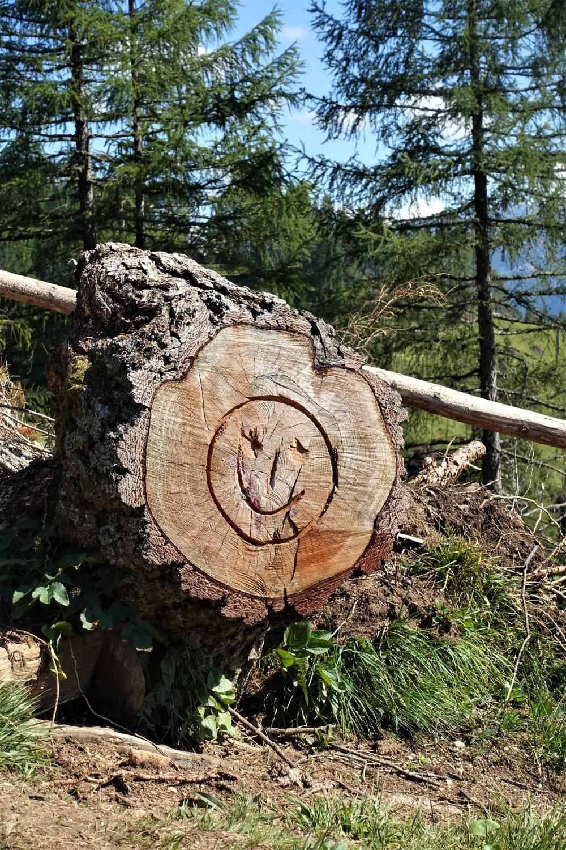 Bergsmiley, Berg-Smiley, Holz, Wald, Dolomiten, Weltnaturerbe, Südtirol, Rosengarten - Catinaccio