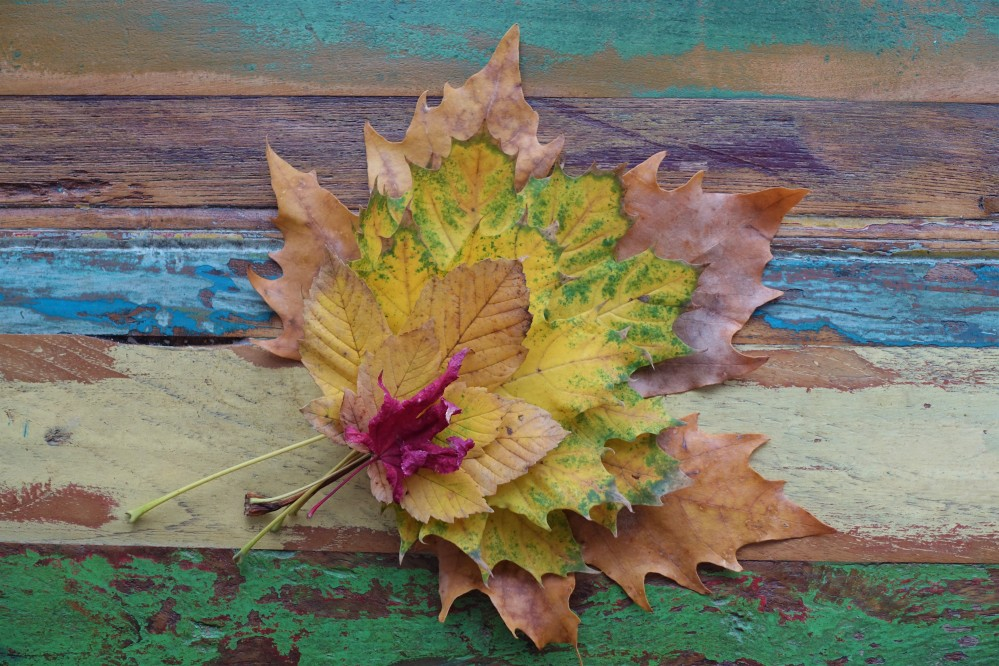 herbstlich, Blätter, Ahorn, Herbst-Inspiration in der Küche, linzersmileys, Food Styling mit Blättern