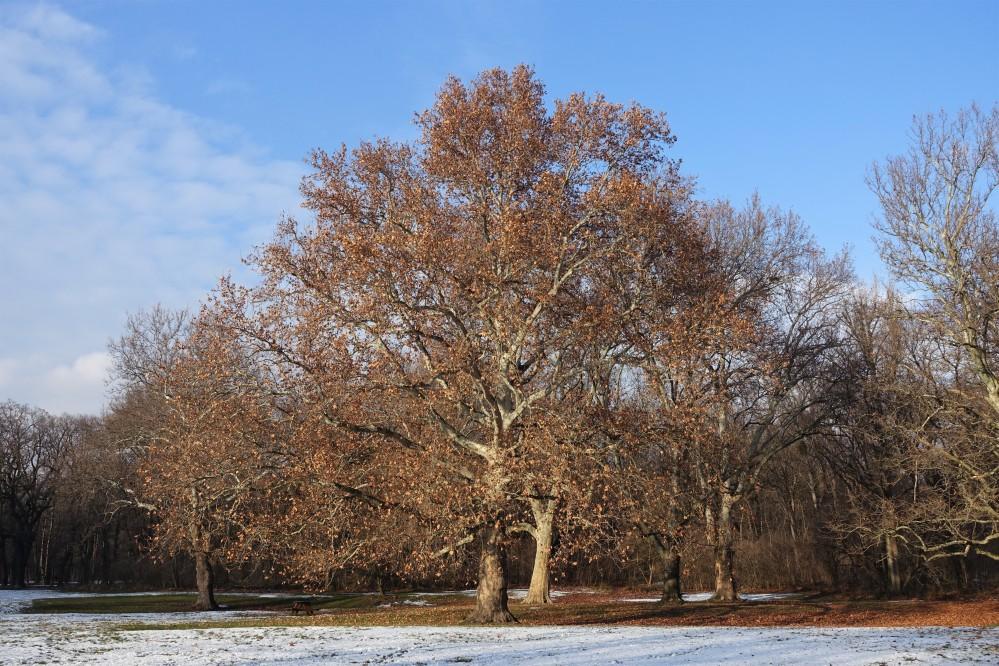 Wiener Prater, im Winter, Schnee, angezuckerte Wiesen