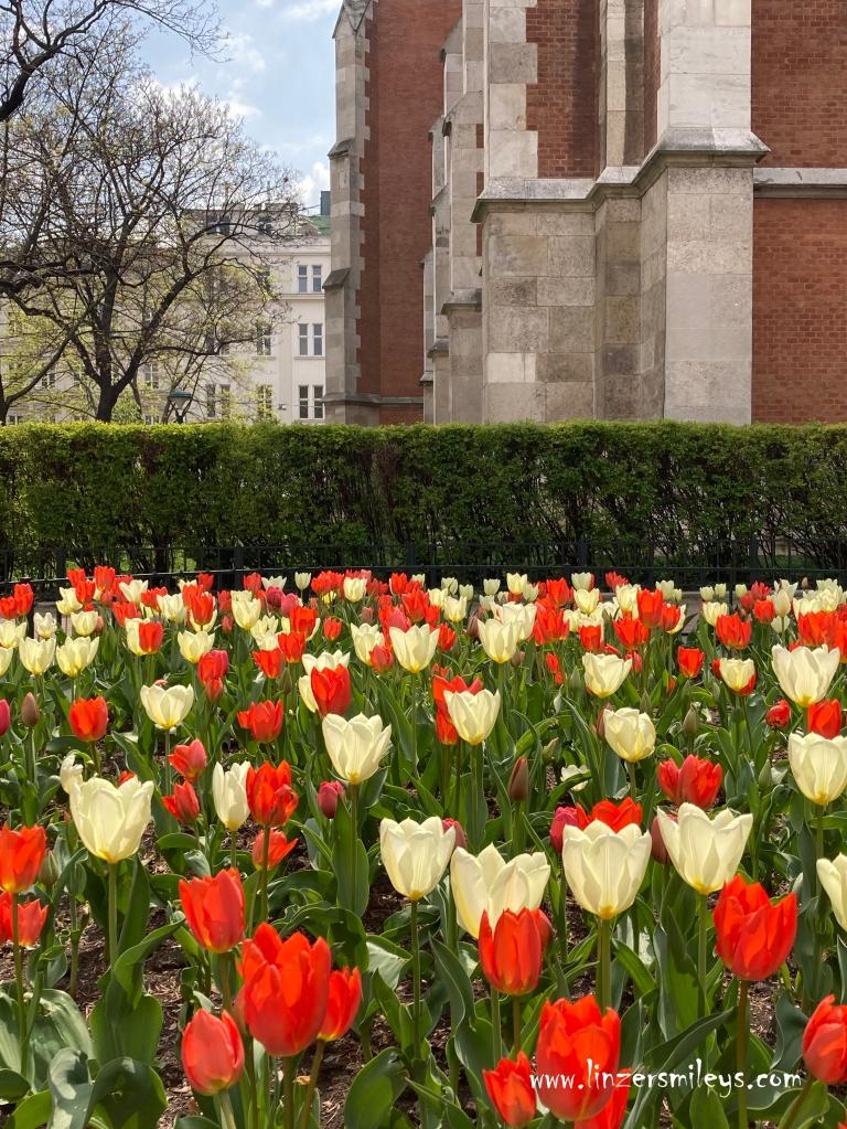 Tulpen in Wien, Frühling, Frühlingserwachen, Wien im April, Wieden